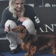 Svetová výstava psov všetkých plemien (FCI) – Salzburg